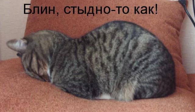 Котику стыдно